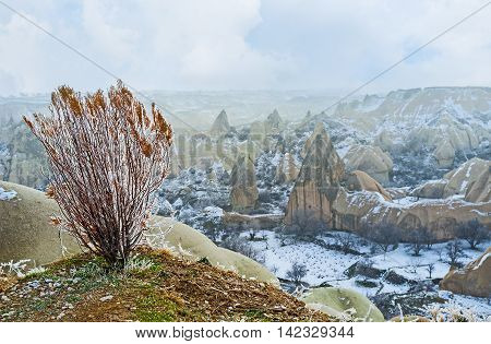 The hill with small thuja overlooks the Pigeon Valley covered with snow Cappadocia Turkey.