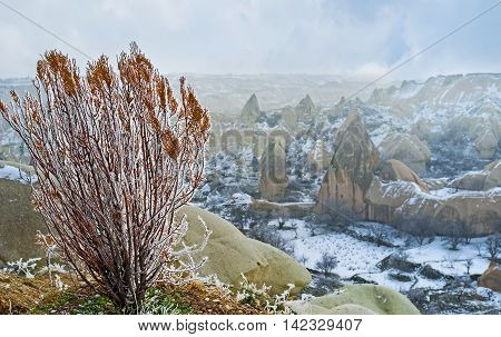 The bush of thuja in white frost with the scenic landscape of the Pigeon Valley on the background Cappadocia Turkey.