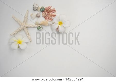 Star fish and sea animal on wooden white background, soft focus