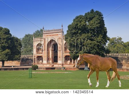 horse on a grass before Gate to Itmad-Ud-Daulah's Tomb (Baby Taj)(17th century) at Agra Uttar Pradesh India