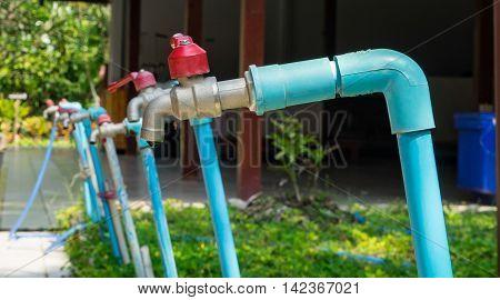 Blue Water Tabs line up  in Garden