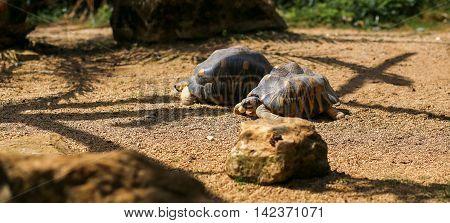 Brown Asian Turtles Feeding In The Zoo