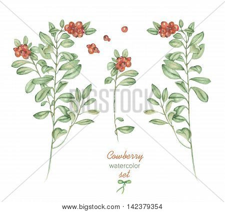 A floral set with the isolated watercolor cowberry, hand drawn on a white background, for self-compilation of the bouquets and ornaments