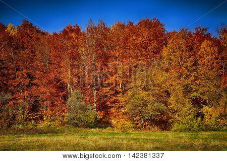 Golden autumn time. Autumnal landscape. Forest in autumn