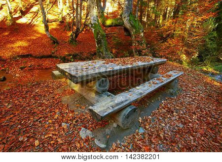 Autumn forest in the mountains. Fallen leaves. Lounge area. Table with benches