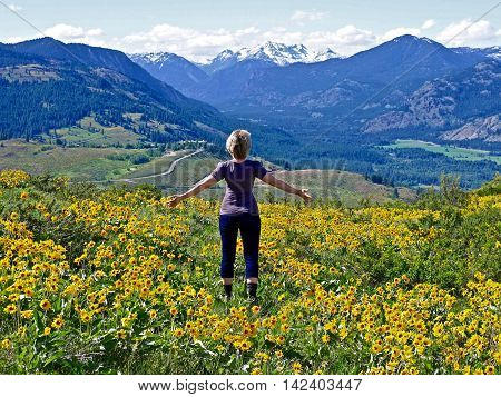 Slim Blond Woman Standing amang Yellow Flower Looking at Snow Capped Mountains. Patterson Mountain near Winthrop WA USA. North Cascades National Park.