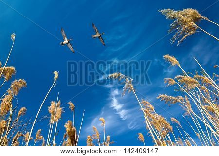 Birds flying against blue evening sunset in the background environment or ecology concept