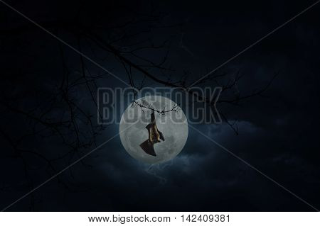 Bat scream and hang on dead tree over moon and cloudy sky Mysterious background Halloween concept