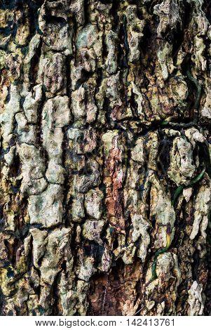 Tree Bark Texture With Leaf Die