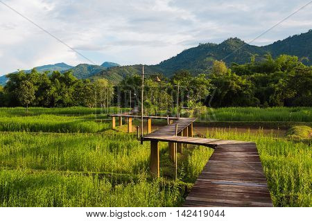 Wood path along rice field and through the mountain, natural landscape background