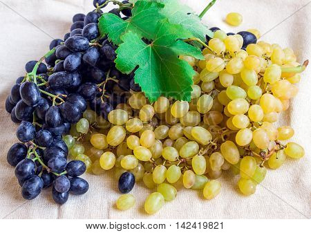 Still life - bright fruit on light fabric. Vintage black and green grapes. Concept - healthy food.