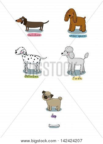 Hand drawn vector illustration.Sketch animals. Doodle Dog. Cocker Spaniel and Dachshund. Dalmatians and poodle. Shar Pei and Pug.