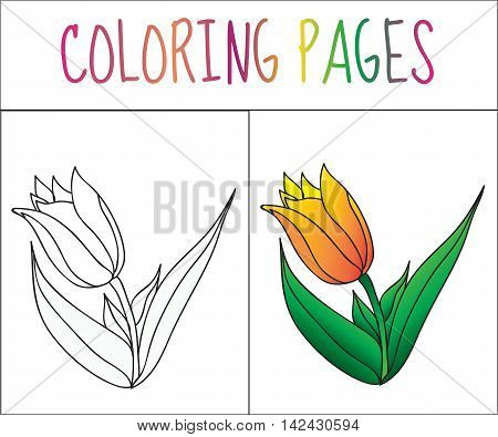 Coloring book page flower tulip. Sketch and color version. Coloring for kids. Vector illustration