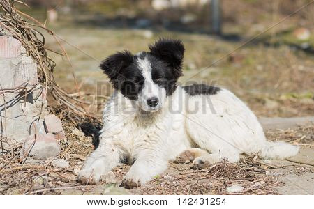 Portrait of cute mixed breed stray puppy under warm spring sun