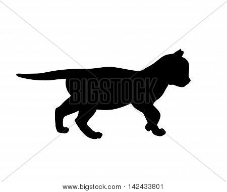Kitten black silhouette on white backgruond. Vector illustration