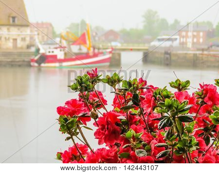Pink bouquet and old boat as blurred background. Honfleur harbor, Normandy, France