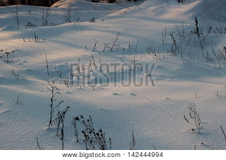 Snow-covered glade, dry plants and decline on snow