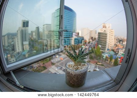 Wide angle shot of city view from the window with a house plant in foreground. Seoul, Republic of Korea
