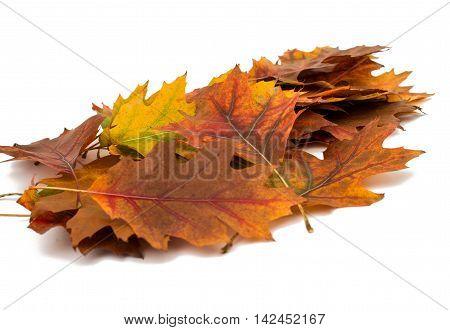 Autumn leaves decorative  plant, red, season, seasonal, selective