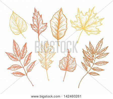 Hand Drawn Vector Illustrations. Set Of Fall Leaves. Forest Design Elements. Autumn