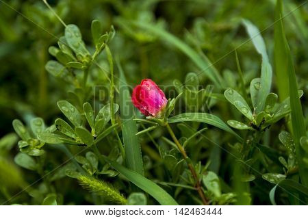 Beautiful small red flower in green field