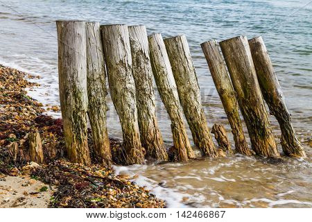 Old wooden groynes worn away by wave and tide.