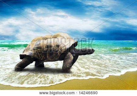 Tortuga grande en la playa de los océanos tropicales