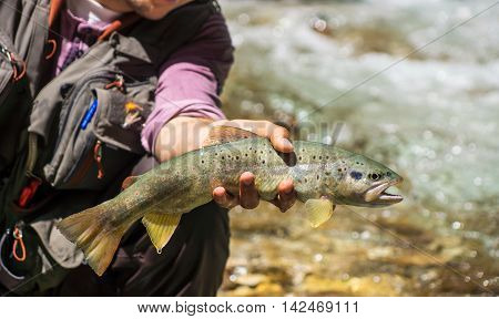 Fly Fisherman Holding Brown Trout