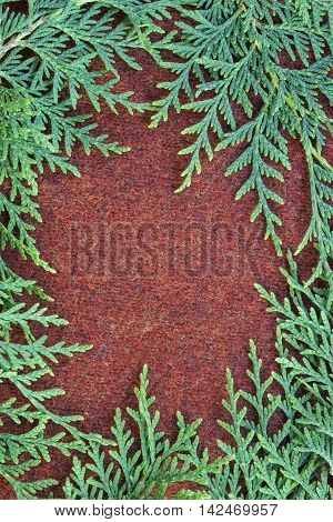 Green fluffy thuja branches on brown knitted cloth. Christmas background card with place for the text top view