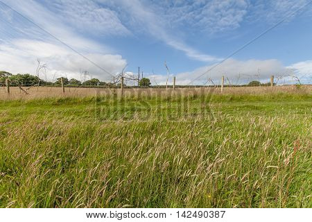 Rural Countrysode View With Blue Sky And Long Grass.