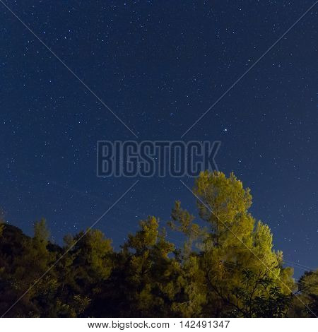 Starry Night Over The Forest At The Troodos Mountains.
