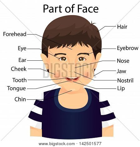 Illustrator of part of face for education