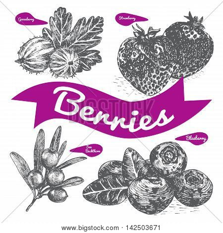 Vector illustration black and white set with berries. Various of berries on white background
