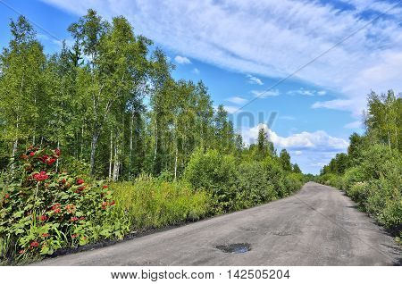 Dirt road through the forest - summer landscape. August - beautiful clouds in the blue sky viburnum red berries on roadside