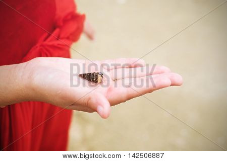 small hermit crab in a hand of kid.