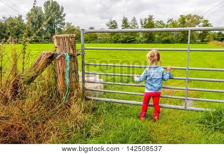 Blond toddler girl with pigtails and red boots looking through the iron gate to the pasture. Her pants are dirty from playing in the wet and muddy environment.