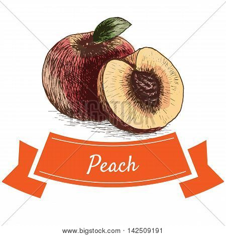Vector illustration colorful set with peach. Illustration of fruits