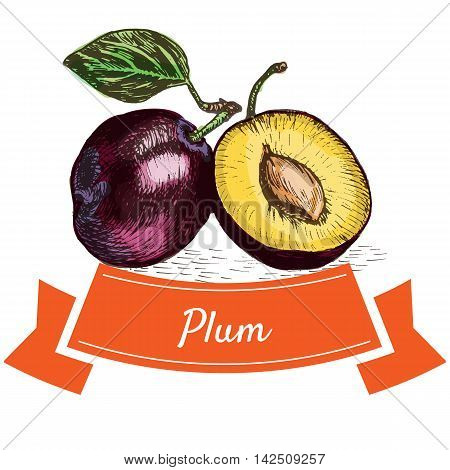 Vector illustration colorful set with plum. Illustration of fruits