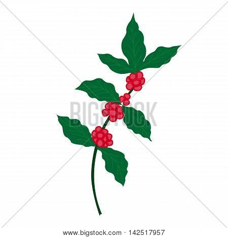 Hand drawn coffee tree branch in color, isolated.