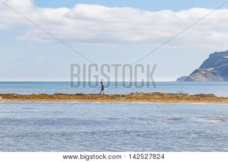 ROBIN HOODS BAY ENGLAND - AUGUST 12: One man walking out on sandbank with fishing net. In Robin Hoods Bay North Yorkshire England. On 12th August 2016.