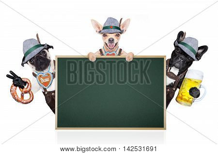 group or team of bavarian german dogs with gingerbread and hat behind placard or banner isolated on white background ready for the beer celebration festival in munich
