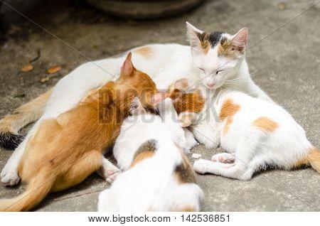 Mother cat feeding her litter of kitten