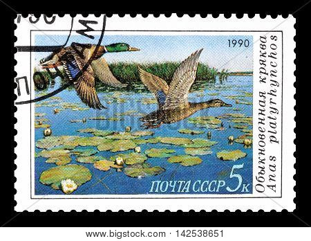 USSR - CIRCA 1990 : Cancelled postage stamp printed by USSR, that shows Mallard.