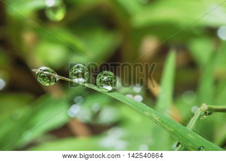 Dew drops on green grass leaves used as background