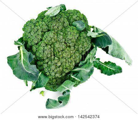 Fresh Juicy Green Broccoli on White Background Studio Photo