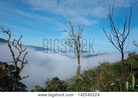 fog view point Tropical Rainforest at Chong Yen Mae-wong Nation park in Thailand