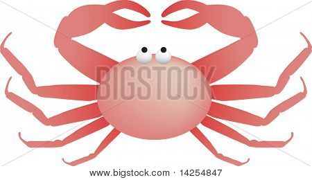 illustration of a pink king crab from the bering sea