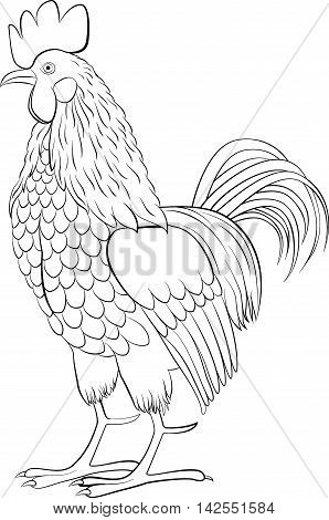 rooster black line art sketch of cock isolated on white