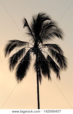 Silhouette of a palm tree on a tropical island against a sunset