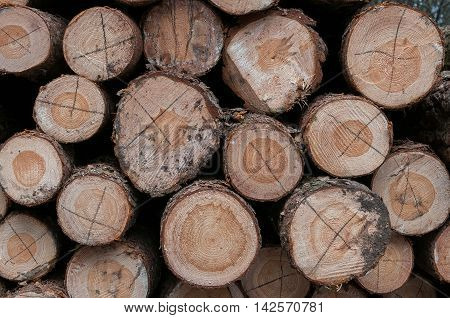Stacked logs. Abstract background. Natural wooden logs.